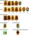 The complex case of Ceratitis cosyra (Diptera, Tephritidae) and relatives. A DNA barcoding perspective